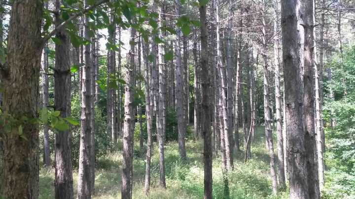 Arboretum07