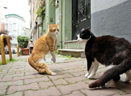 Roberta Zunini e i gatti abbandonati di Istanbul