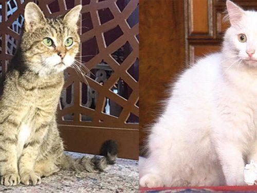 Tutti i gatti che vivono ad Ayasofya