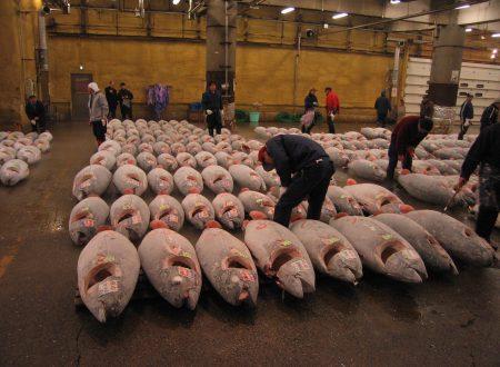 Cose da sapere prima di visitare il mercato del pesce Tsukiji